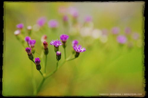 Random flowers...