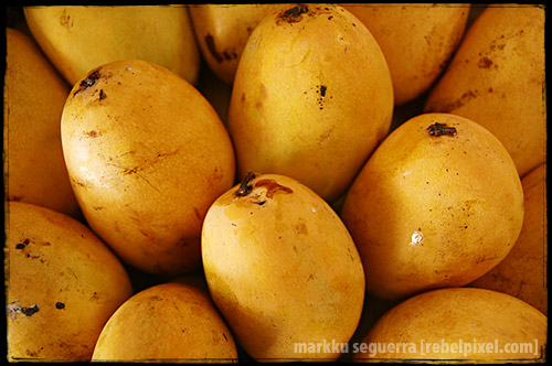 Mangoes. Lubao, Pampanga. 2007.